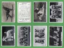 Cigarette cards Dogs 1939 different dog breeds photos